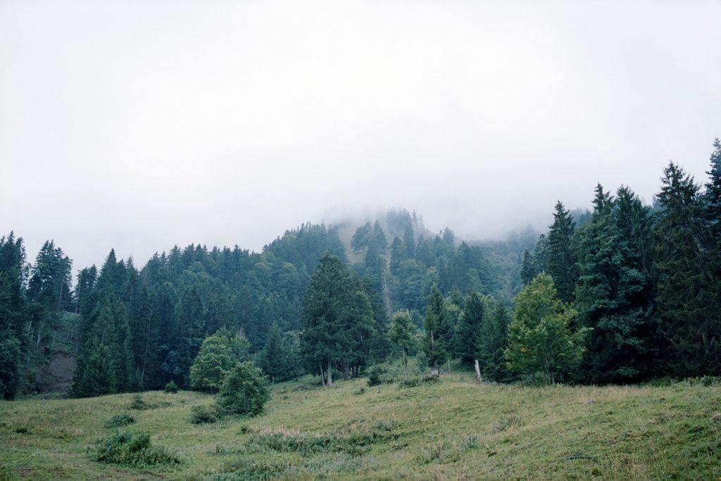 brugner_asischt_03